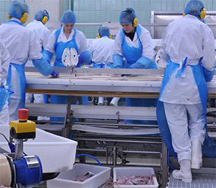 Industrial meat processing workers in plastic coveralls